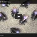 ゴキブリのラジコンの画像